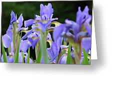 Irises Flowers Art Prints Blue Purple Iris Floral Baslee Troutman Greeting Card