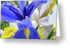 Irises Flowers Artwork Blue Purple Iris Flowers 1 Botanical Floral Garden Baslee Troutman Greeting Card