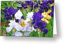 Irises Flowers Garden Botanical Art Prints Baslee Troutman Greeting Card