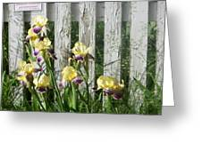 Irises On A Pickett Fence Greeting Card
