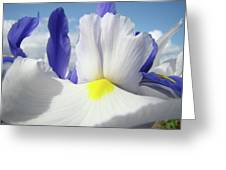 Irises White Iris Flowers 15 Purple Irises Art Prints Floral Artwork Greeting Card