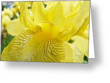 Irises Yellow Brown Iris Flowers Irises Art Prints Baslee Troutman Greeting Card