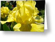 Irises Yellow Iris Flowers Floral Art Prints Botanical Garden Artwork Giclee Greeting Card