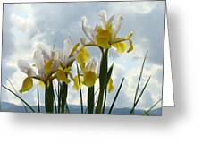 Irises Yellow White Iris Flowers Storm Clouds Sky Art Prints Baslee Troutman Greeting Card