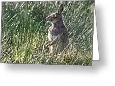 irish Hare Greeting Card