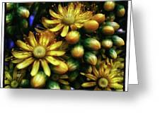Irish Rose. Also Known As Pinwheel Greeting Card