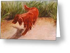Irish Setter In The Grass Greeting Card
