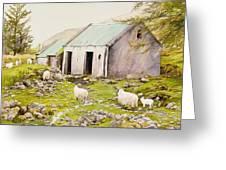 Irish Sheep Farm Greeting Card