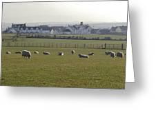 Irish Sheep Farm I Greeting Card