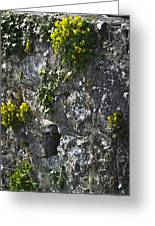Irish Stone Flowers Greeting Card