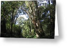 Ironwood Greeting Card