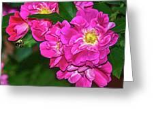 Irresistible Rose - Paint Greeting Card