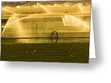 Irrigation System Operating At Sunset Greeting Card