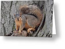 Irritated Squirrel Greeting Card