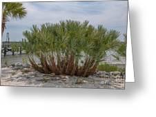 Island Palms Greeting Card