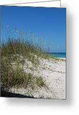 Island Sea Oats Greeting Card