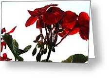 Isolated Red Geranium Greeting Card