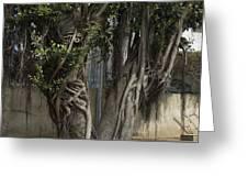 Israel, Tree Trunk Greeting Card