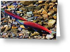 It Is Spawning Time Greeting Card