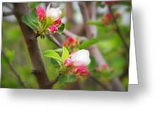 It Is Spring Time In The Annapolis Valley Greeting Card