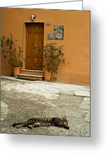 Italian Cat Greeting Card