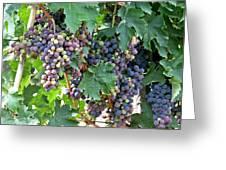 Italian Grapes Greeting Card