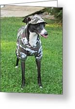 Italian Greyhound Army Greeting Card