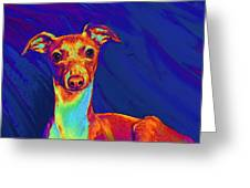 Italian Greyhound  Greeting Card by Jane Schnetlage