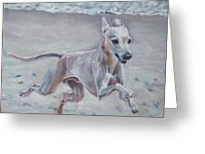 Italian Greyhound On The Beach Greeting Card by Lee Ann Shepard
