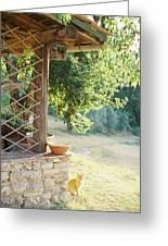 Italian Kitty Greeting Card
