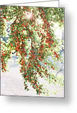 Italian Plum Tree Greeting Card