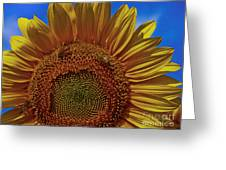 Italian Sunflower With Bees Greeting Card