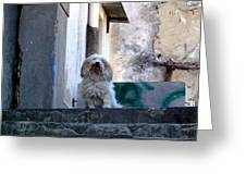 Italy's Capri Doggie Greeting Card