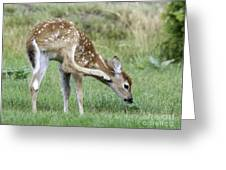 Itchy Fawn Greeting Card