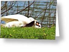 Itchy Swan Greeting Card
