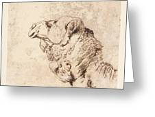 itle Head of a Dromedary Greeting Card