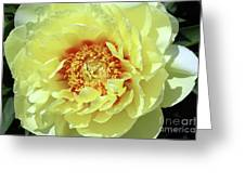 Itoch Peony  Greeting Card