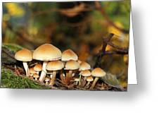 It's A Small World Mushrooms Greeting Card