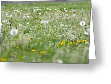 It's Dandelion Time Greeting Card