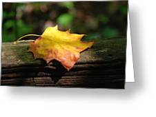 Its Fall Greeting Card