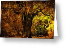 It's Not The Angel Oak Greeting Card