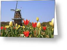Its Tulip Time Greeting Card