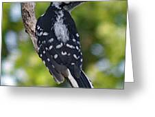 I've Got Your Back - Female Downy Woodpecker Greeting Card