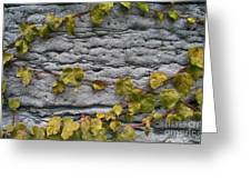 Ivy And Ancient Wall In Old Montreal Hd Photography Greeting Card