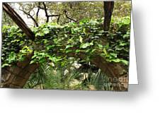 Ivy-covered Arch At The Alamo Greeting Card