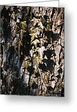 Ivy Leaves Grunge Tone Greeting Card