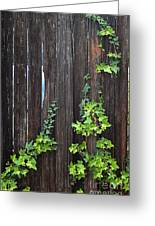 Ivy On Fence Greeting Card