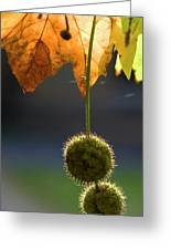 Ivy Pods Greeting Card