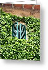 Ivy Shutters Greeting Card