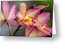 Iwanagara 9936 Greeting Card